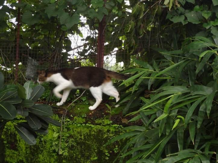 cat-prowl
