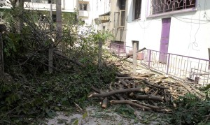 This was most of the tree that provided shade to the presswaali and her sisters.