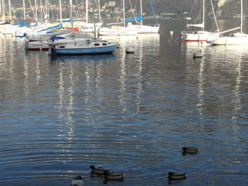 pesca-boatsducks