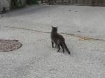...gateaux of gattis.
