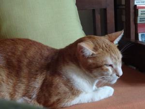 tiggy-snooze