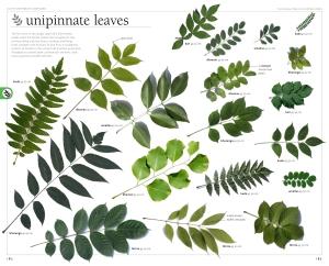 Jungle-trees-sampler-3